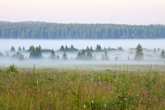 Grassland and woods in fog in the morning Royalty Free Stock Photos