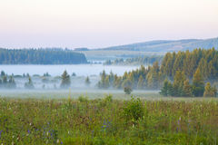 Grassland and woods in fog in the morning Stock Images