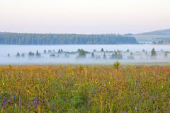 Grassland and woods in fog in the morning Stock Photos