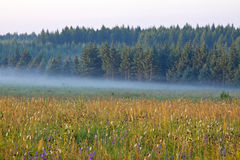 Grassland and woods in fog in the morning Royalty Free Stock Images