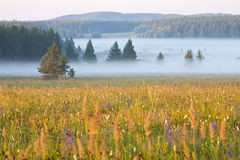 Grassland and woods in fog in the morning Stock Photo