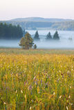Grassland and woods in fog in the morning Royalty Free Stock Photo