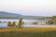 Grassland and woods in fog in the morning Stock Photography