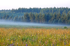 grassland and woods in fog in the morning Royalty Free Stock Image