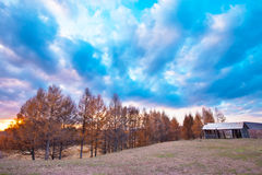 Grassland and yellow trees at dusk Royalty Free Stock Image