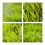 Grasslands Royalty Free Stock Photography
