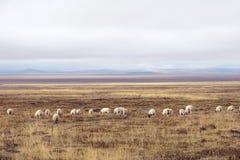 Grasslands Stock Photos