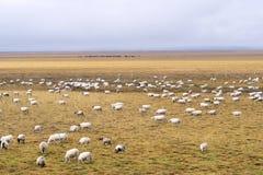 Grasslands Royalty Free Stock Photo