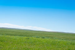 Grasslands Royalty Free Stock Photo