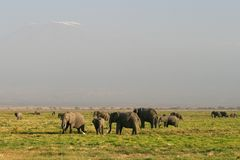 Grasslands of the African elephant in Kenya Royalty Free Stock Photos