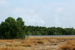 Grasslands and air pollution Royalty Free Stock Photo