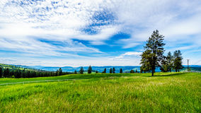 Grasslands along the Sun Peaks Road Stock Image