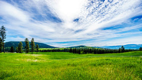 Grasslands along the Sun Peaks Road Stock Photo