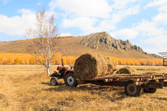 Grasslands of autumn scenery Royalty Free Stock Image
