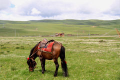 The grasslands horse Stock Image