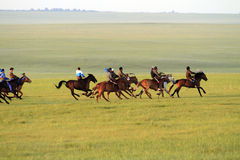 Grasslands on horse racing Royalty Free Stock Images