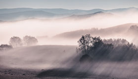 The fog of grassland Royalty Free Stock Photography