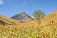 Grasslands in Kyrgyzstan Royalty Free Stock Photography
