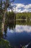 Grasslands, lakes and rivers in Yellowstone National Park. In Wyoming royalty free stock photography