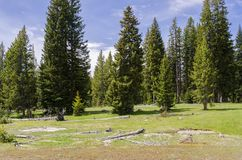 Grasslands, lakes and rivers in Yellowstone National Park. In Wyoming stock photography
