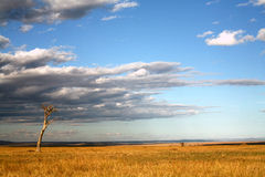 Grasslands of the Masai Mara. Reserve (Kenya Royalty Free Stock Photography