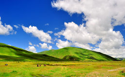 Grasslands and mountains. Under blue skies Stock Photo
