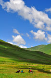 Grasslands and mountains. Under blue skies Stock Photography