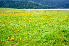 Grasslands and mountains Stock Image