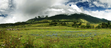Grasslands Stock Photography