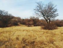 Grasslands, Ranthambore National park. Tiger reserve Rajasthan stock image