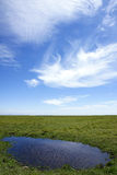 Grasslands scenery. Green grass, blue sky and white cloud Stock Photography
