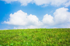 The grasslands ofthe sky and white clouds Stock Images