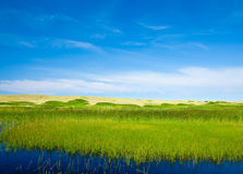 Grasslands and summer sky. Various grasses separate the nearby pond from the dunes and ocean on the horizon Royalty Free Stock Images