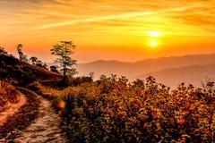 Grasslands on sunrise. Stock Image