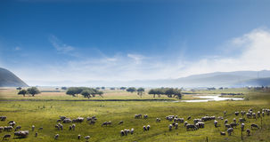 The grasslands Stock Photography