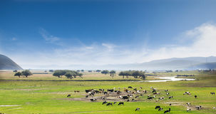 The grasslands Stock Images