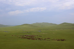 Grasslands, valleys, rivers, horses Stock Photo
