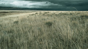 Grasslands Stock Images