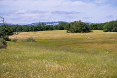 Grasslands view, San Francisco bay area, California royalty free stock photos