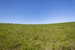 Grasslands Wilderness Landscape. Grassland hillside summer blue wilderness landscape Stock Image