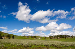 Grasslands in Yellowstone. National Park in Wyoming Stock Photos