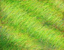 Grasslane Στοκ εικόνα με δικαίωμα ελεύθερης χρήσης