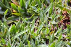 Grasspades die met ochtenddauw worden behandeld stock fotografie