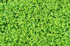 Grassplot Royalty Free Stock Photography