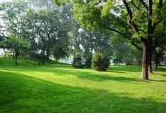 Grassplot en bomen Royalty-vrije Stock Foto