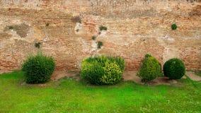 Grassplot verde contra a parede antiga do castelo Foto de Stock Royalty Free