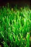 Grassplot vert Image stock