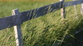 Grassprieten die in de wind voor een houten omheining slingeren stock video