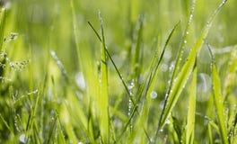Grassprietje royalty-vrije stock afbeelding
