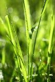 Grassprietje stock afbeelding